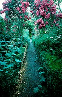 A path through a blooming garden, pink roses