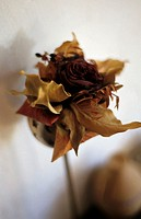 A dried flower