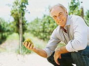 portrait of a mature man holding a bunch of grapes in a vineyard