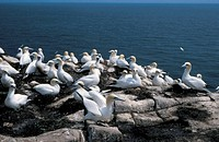 seagulls perched on rocks