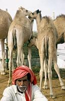 Camel market in Al Ain, UAE