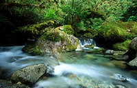 River through rainforest. Fiordland National Park. New Zealand. South Island