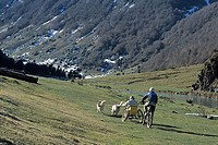 SPORT FOR THE HANDICAPPED<BR>Models.<BR>Sled dogs with all-terrain wheelchair. Estaing lake, in the Midi-Pyrénées region of France.