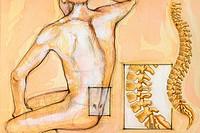 LUMBAR VERTEBRA DRAW<BR>Detail of lumbar region of spinal column.