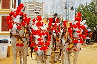 Horse fair in Jerez. Cadiz province. Spain.