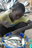 AN AFRICAN CHILD<BR>Photo essay for press only.<BR>Child working at the Mbour port, Senegal.