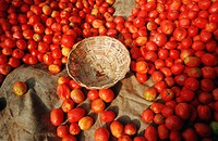 Tomatoes at Kalaw market, Burma