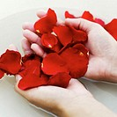 A pair of hands holding rose petals