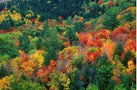 High angle view of trees in a forest, Green Mountain National Forest, Vermont, USA