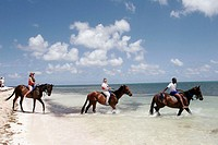 Indigenous Horse Shelter, horseback riding excursion, beach. Atlantic Ocean. Grand Turk. Turks and Caicos.