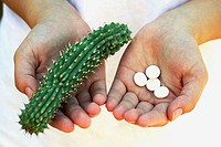 Hoodia gordonii and pills. The medicinal use of Hoodia is long known by the indigenous populations of Southern Africa (Bushman) and recently Hoodia ex...