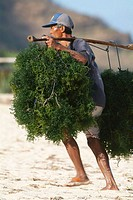 Man carrying seaweeds, Asia