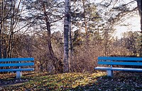 Trees and benches at a park