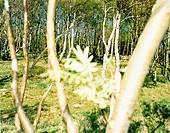 A grove