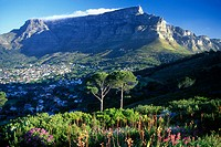 Scenic Table Mountain from Signal Hill, Capetown, South africa.