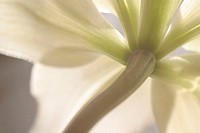 Low angle view of a stalk of a flower.