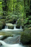River flowing, Forest, Malaysia