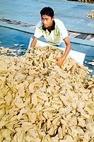 Collecting keropok, Kuantan, Pahang