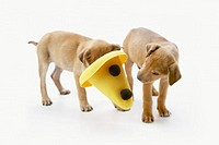Two Puppies Playing With Yellow Hat