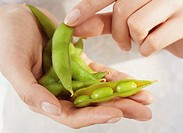 Woman holding green soy beans (edamame), close-up