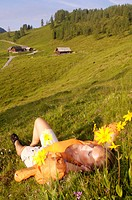 Austria, alps, woman lying in meadow