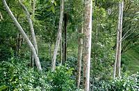 Vegetation. Pinar del Río, Cuba