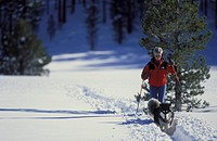 Woman follows her husky dog along a trail while cross-country skiing