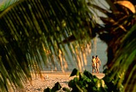 Couple walking on the beach, through palm tree