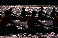 Two men´s rowing teams, taken near the end of a race.  Backlit, high contrast lighting.  Taken on the Potomac River.  Large rowing file available. (Sp...
