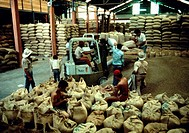 Workers load coffee beans into burlap sacks in a Foncafe coffee cooperative warehouse in Lara State, Venezuela.