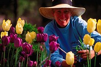 Portrait of a forty year old professional gardener wearing a hat while working in a patch of yellow and purple tulips.
