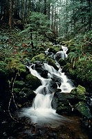 Waterfall in the forest, Mt. Ranier, Washington.