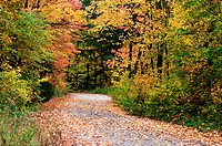 Leaf littered country road. Ontario, Canada