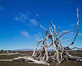 10212774, USA, America, North America, Hawaii, Big Island, Volcanoes, national park, Devastation Trail, lava field, branches, dr