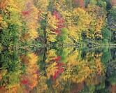 Water Reflecting Autumn Forest