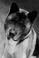 Dog Tilting Head