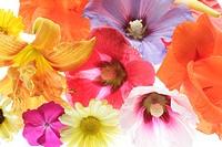 Blooms, differently, detail   Plants, flowers, bloom mixture, potpourri, mixture, splendor, color splendor, bloom splendor, summer flowers, ornament f...