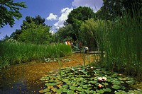 Park, pond, wareserpflanzen,%0AWeg, Spaziergänger%0Ano models release%0APark, grounds, landscape garden, Seerosenteich,%0ASeerosen, water plants, shor...