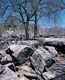 Neoproterozoic carbonate rocks  Dating from 800 million years ago, these rocks contain some of the oldest fossilised stromatolites in Namibia  A strom...