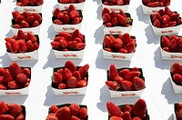 Cardboard peels, strawberries,    Fruits, berries, Sammelnussfrüchte, red, newly, harvest-newly, nutrition healthy, rich in vitamins, food, health-con...