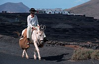 Farmer, riding, Donkey,, Lanzarote,, Canary, Islands,, Spain