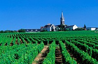 France, Nièvre (58), village of Saint Aandelain in Pouilly sur Loire vineyard