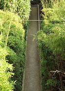 Landscaping, pathway through tall bamboo