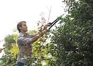 Man doing yardwork, trimming shrub