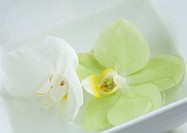 Orchid blossoms in dish of water