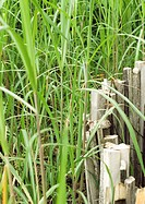 Long grass and wooden fence