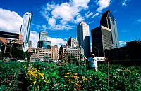 Canada, Quebec, Montreal, a Community garden of the downtown