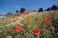 Italy, Tuscany, Castello di Brolio