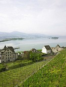 Switzerland, Rapperswil, hillside vineyard, elevated view