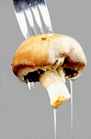 Close-up of a wet mushroom on a fork
